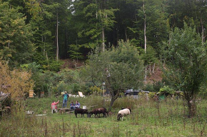 Apfelernte Etzwiesen 7