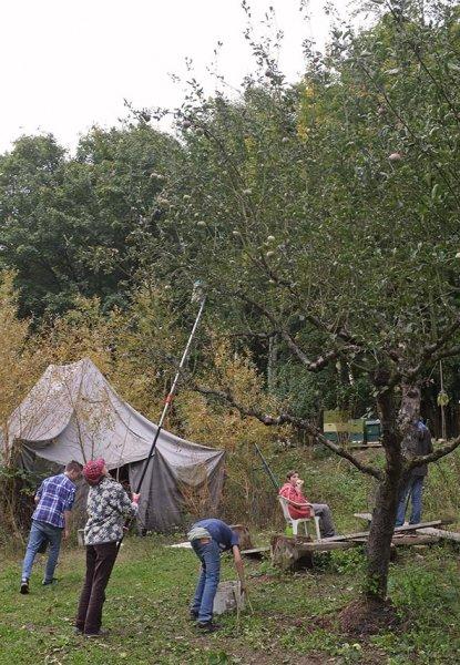 Apfelernte Etzwiesen 2