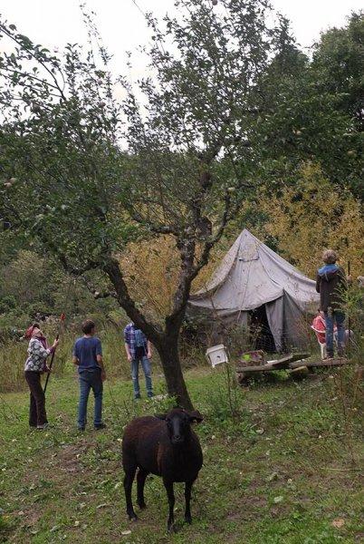Apfelernte Etzwiesen 3