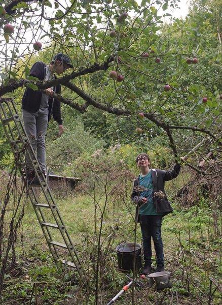 Apfelernte Etzwiesen 5