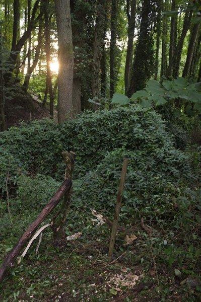 Zaunbau Etzwiesen 3