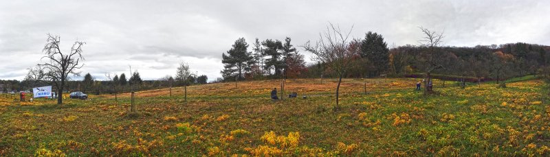 NABU-Einsatz Kirschgarten 2
