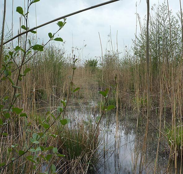 Pfungstädter Moor - Grabensystem