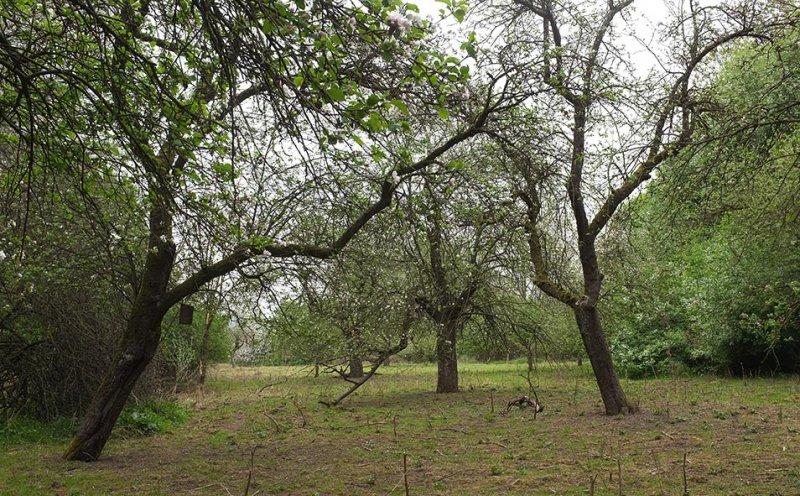 Pfungstädter Moor - Streuobstwiese 1