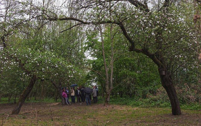 Pfungstädter Moor - Streuobstwiese 2