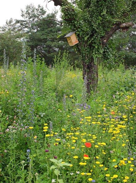 Bienenweide 1