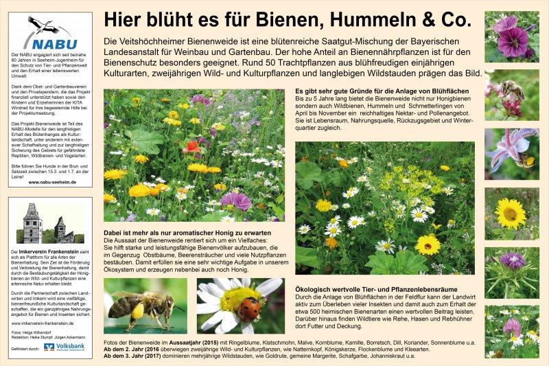 Bienenweide Malchen Plakat