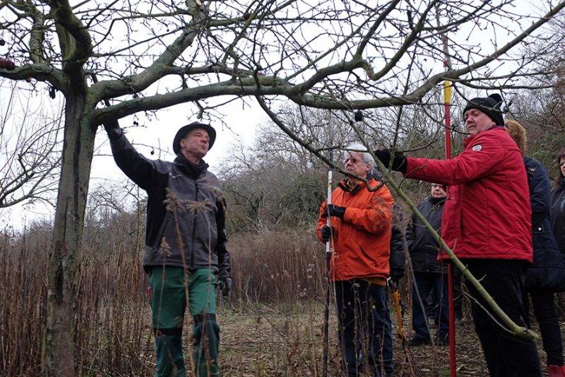 Kurs Obstsschnitt im Pfarrfeld am Seeheimer Blütenhang 10 10x15s