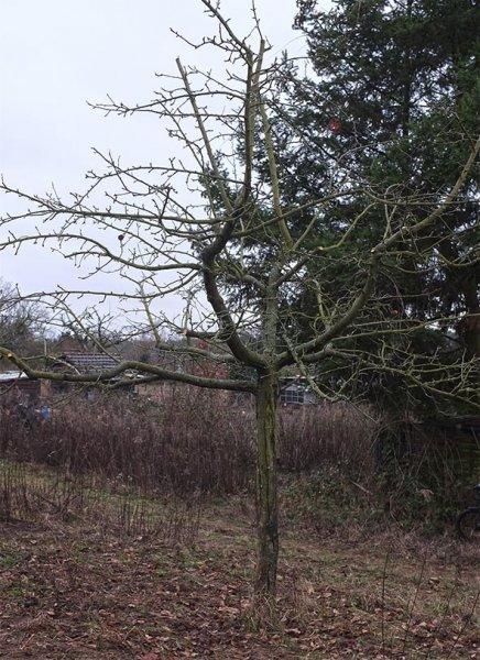Kurs Obstsschnitt im Pfarrfeld am Seeheimer Blütenhang 16 10x13s