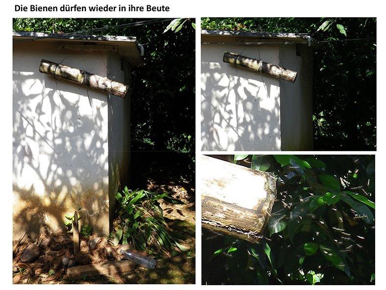 Stachellose Bienen von Kerala 16