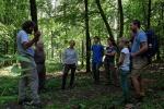 Waldspaziergang zu den Eseln 07