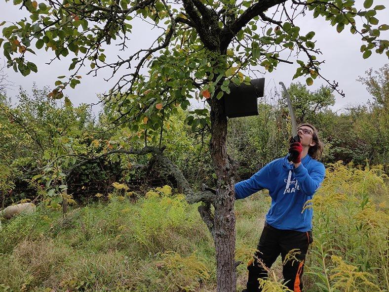04-Einsatz-Bienenweide-Baumschutz-13-10x13s