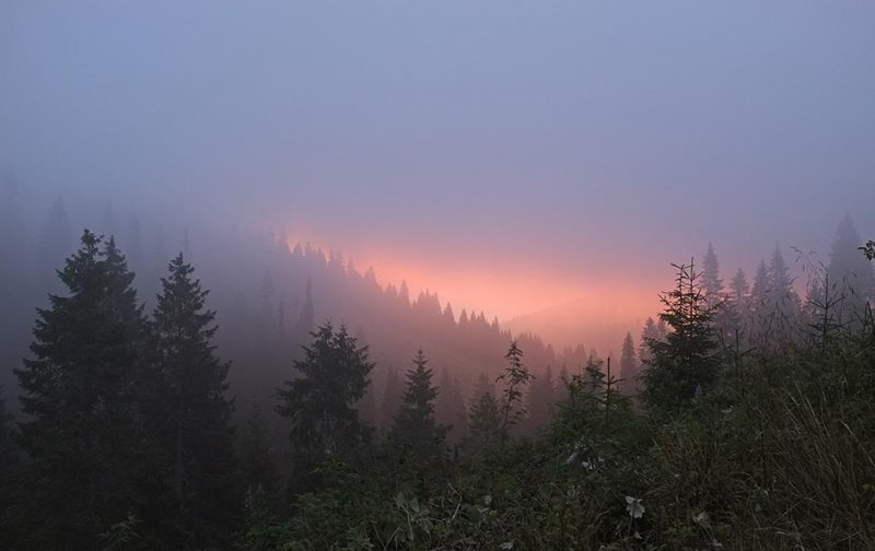 01 Morgenrot im Wald
