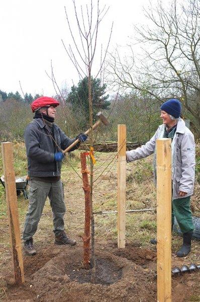 01 Weide Dieburger Strasse - Baumschutz
