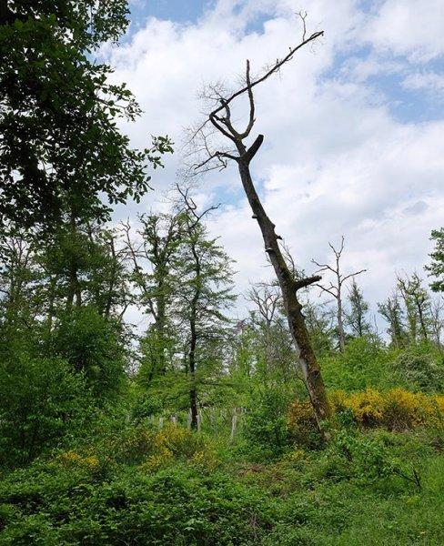 Zusammengebrochener Wald