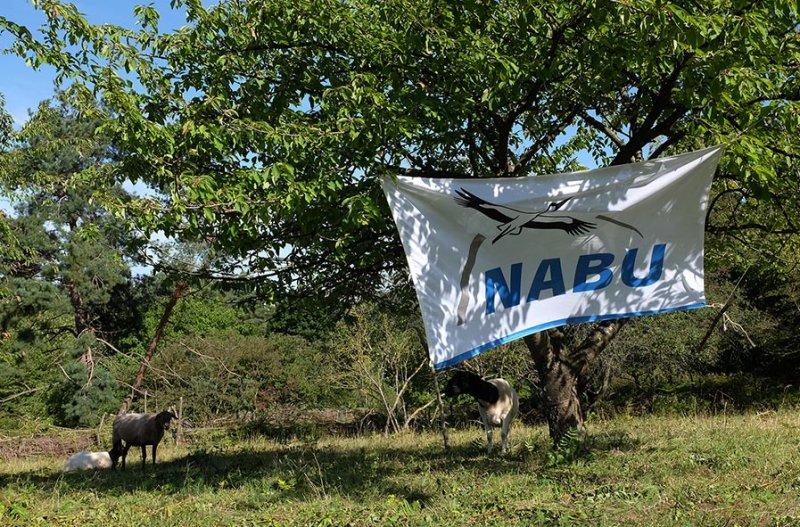 NABU-Schafe