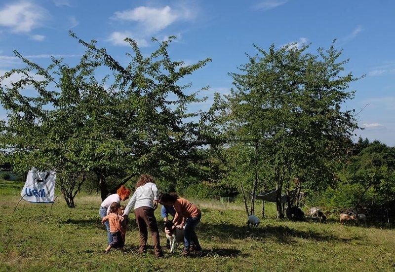 Schäfer auf der Götterbaumweide 08