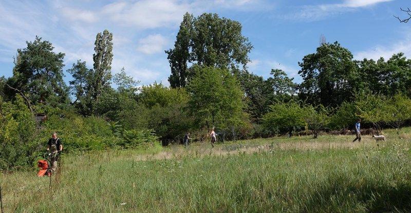 Schäfer auf der Götterbaumweide 09