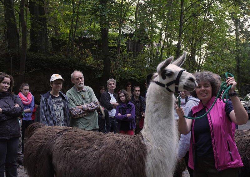 Lama-Wanderung Einweisung 3