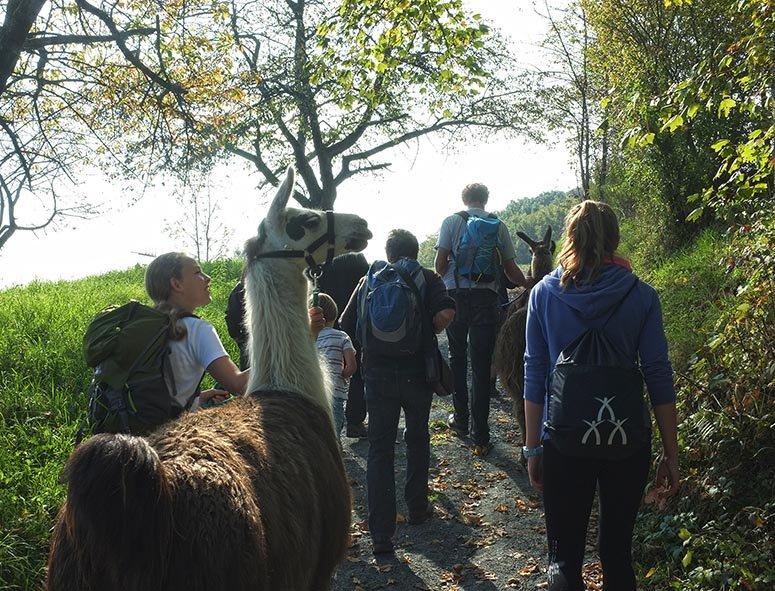 Lama-Wanderung Feldweg 1