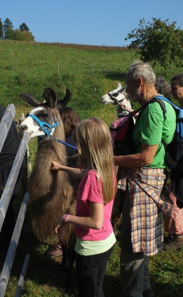 Lama-Wanderung Gehege Ober-Beerbach 2