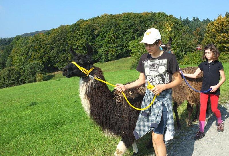 Lama-Wanderung Ober-Beerbach 01