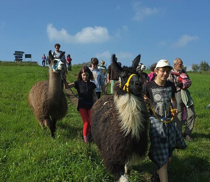 Lama-Wanderung Ober-Beerbach 09