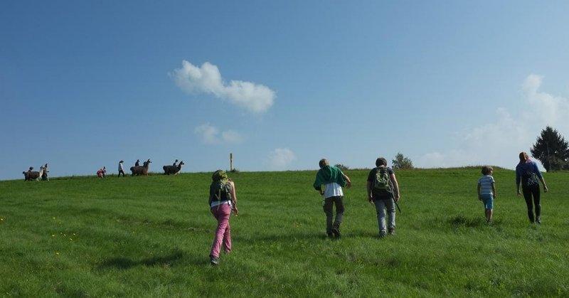 Lama-Wanderung Ober-Beerbach 14
