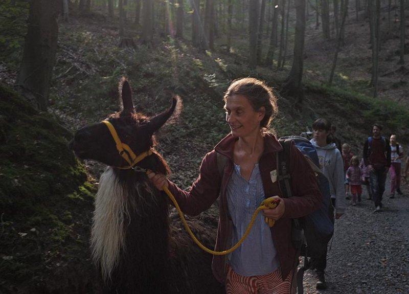 Lama-Wanderung Wald 01