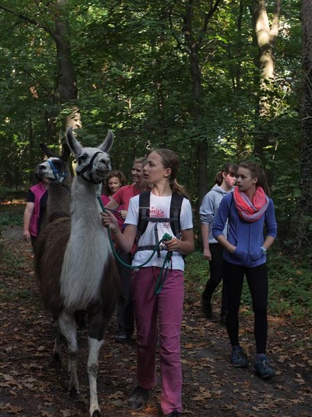 Lama-Wanderung Wald 09