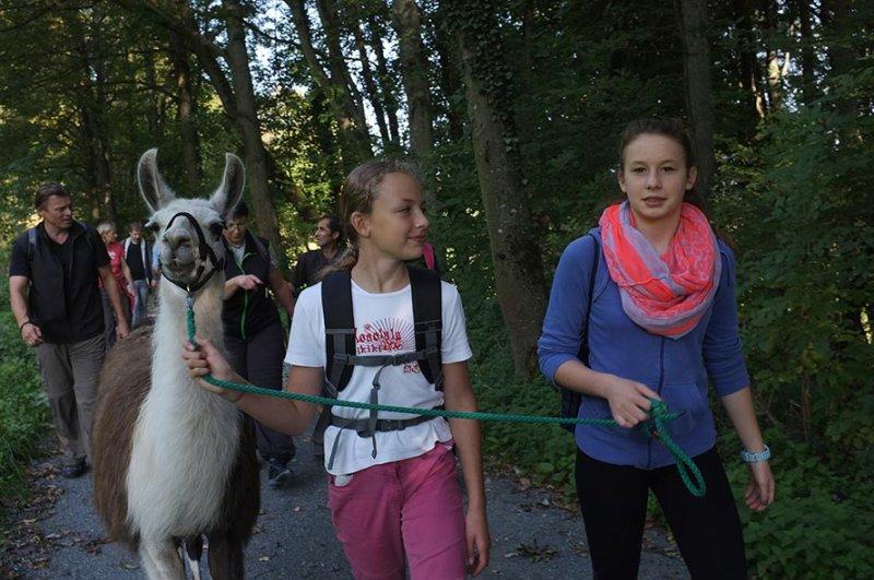 Lama-Wanderung Wald 10