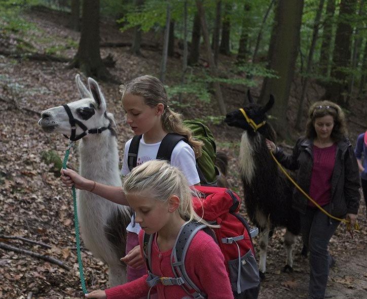 Lama-Wanderung Wald 04