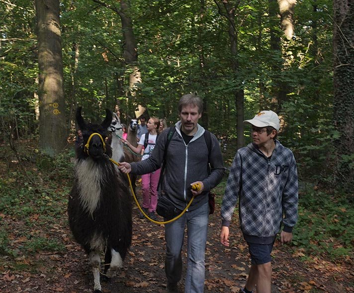 Lama-Wanderung Wald 08