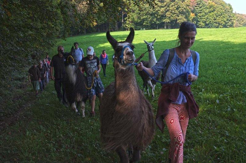 Lama-Wanderung Waldrand 2
