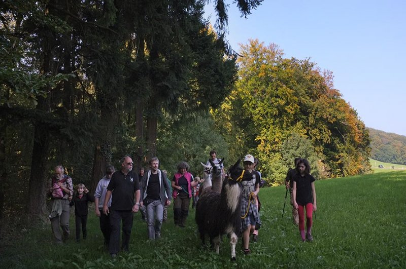 Lama-Wanderung Waldrand 3