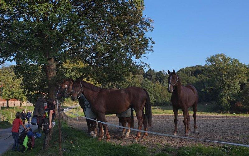 Überlebenstour - bei den Pferden 1