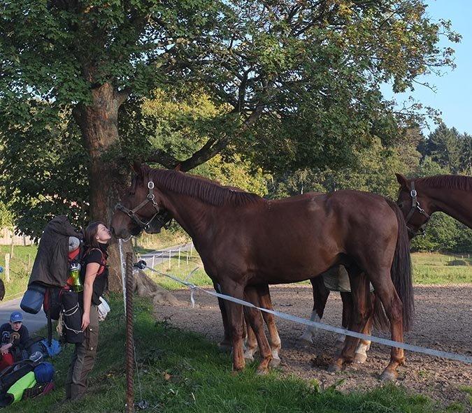 Überlebenstour - bei den Pferden 2