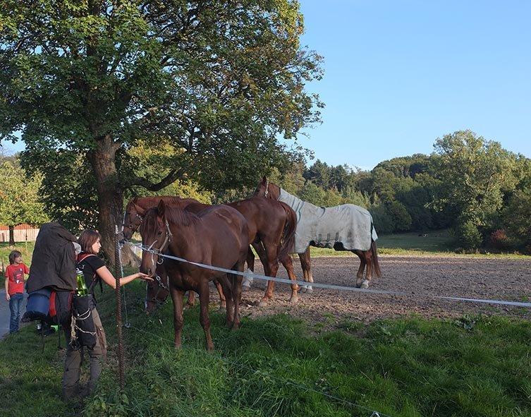 Überlebenstour - bei den Pferden 3