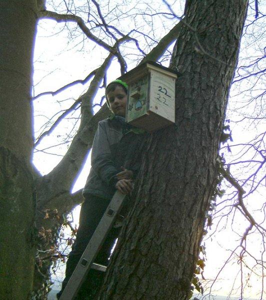 Waldwölfe-hängen-Nistkästen-3