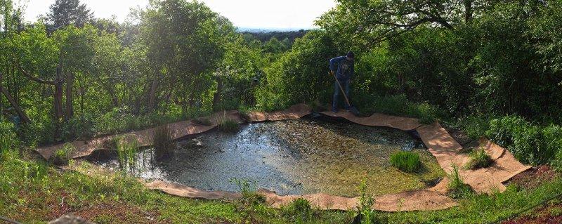 Teich im Wühlmausgarten 10