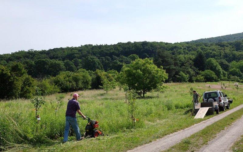 Kirschgarten 02