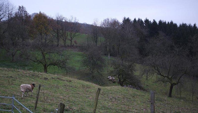 schafgruppe-paul-der-mietbock-5-small