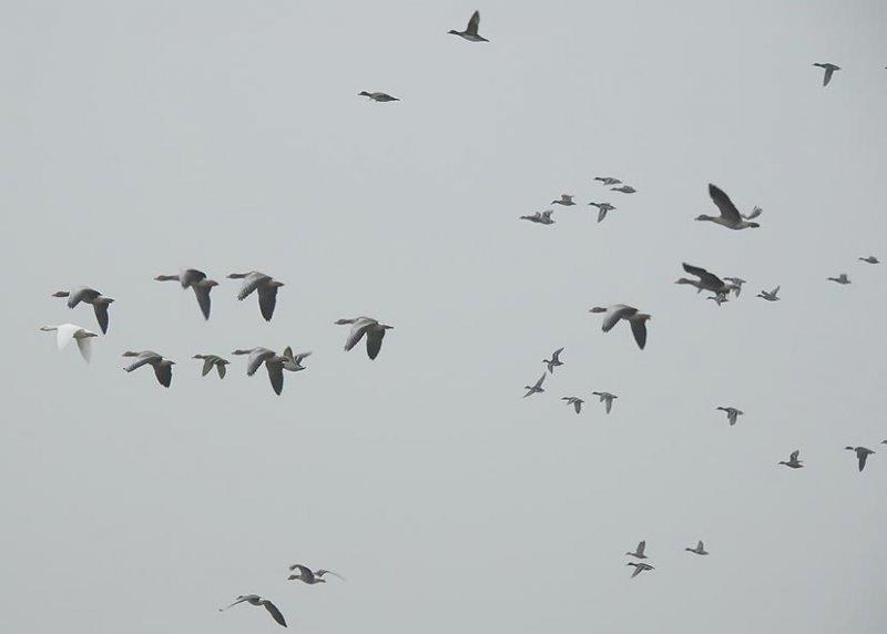 02 Aufgeschreckte Wasservögel