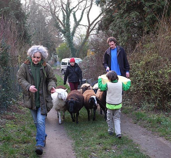 Schafe umstellen 3 10x15s
