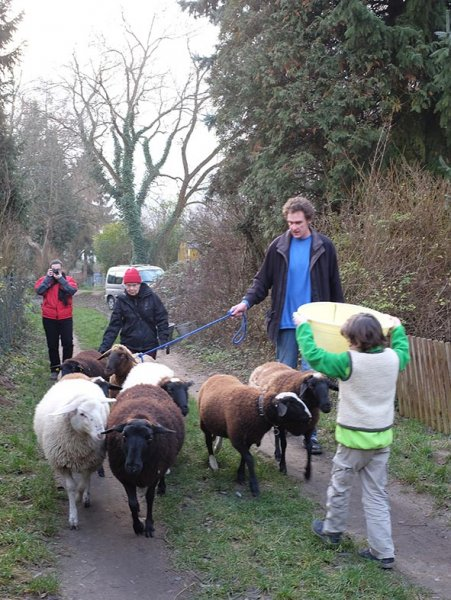 Schafe umstellen 3
