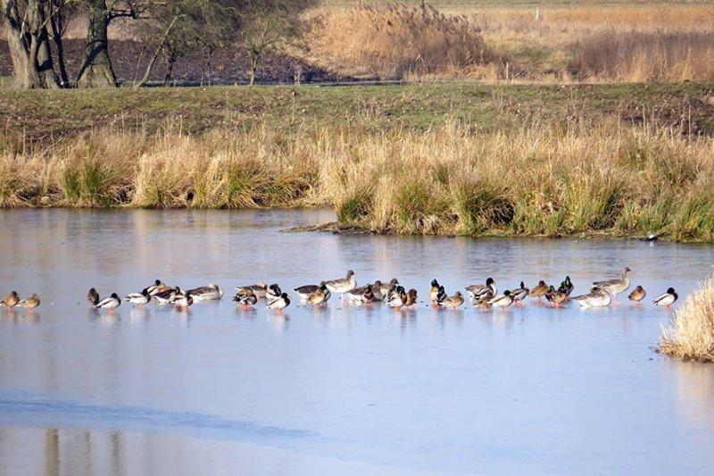 02 Rastende Wasservögel vor dem Wintersportbetrieb