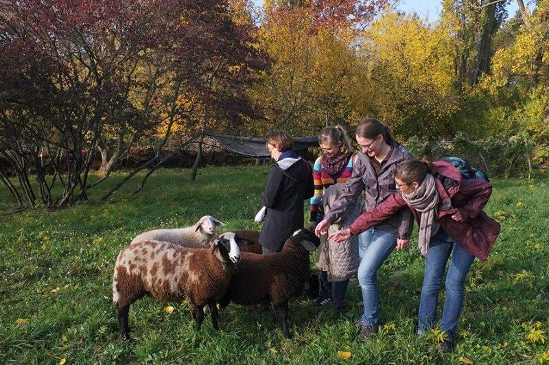 Besuch bei den NABU-Schafen 1