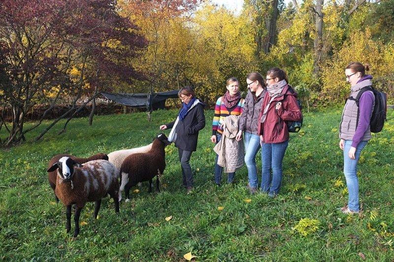 Besuch bei den NABU-Schafen 2