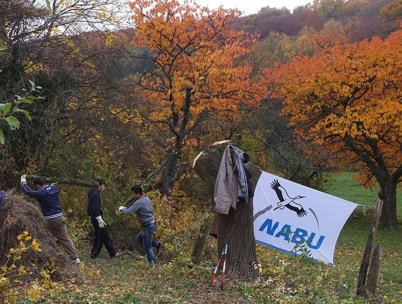 Einsatz NABU-Grundstück 19