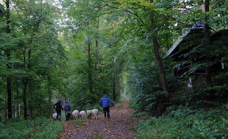 Durch den Wald 11